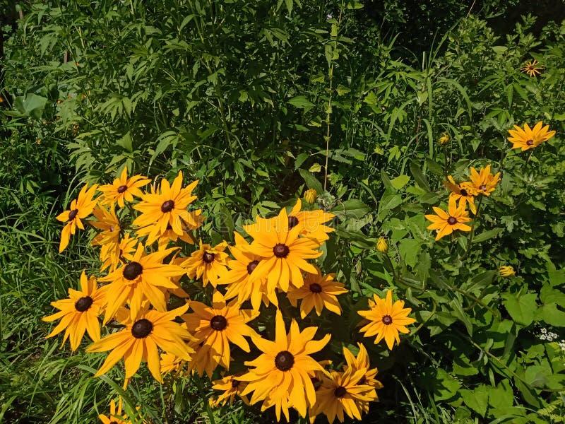Flor de Sun en la India imagenes de archivo