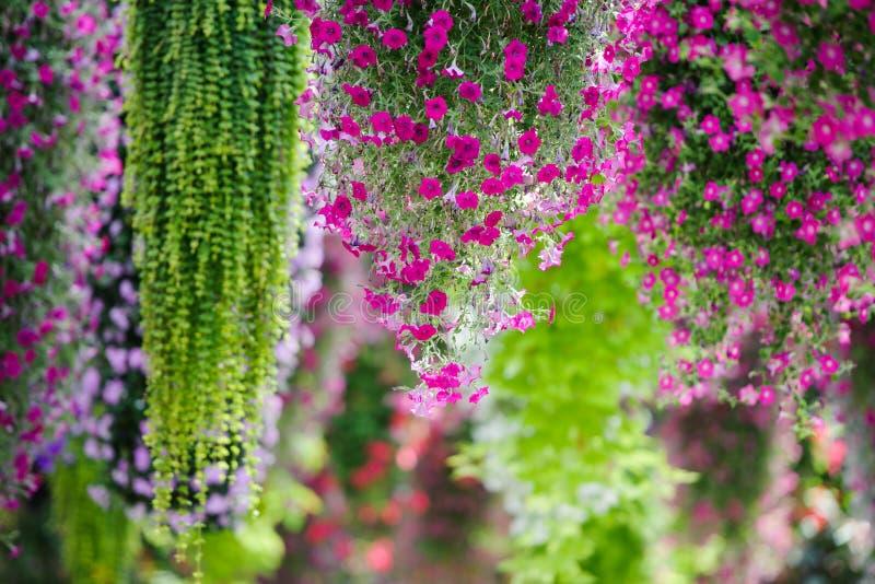 Flor de suspensão fotos de stock royalty free