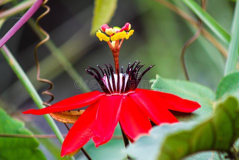 Flor de tres niveles fotografía de archivo libre de regalías