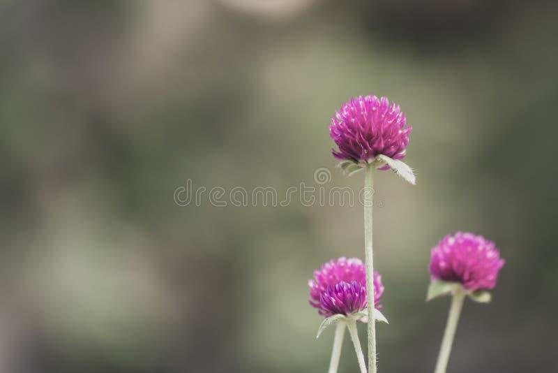 flor de tres púrpuras fotos de archivo libres de regalías