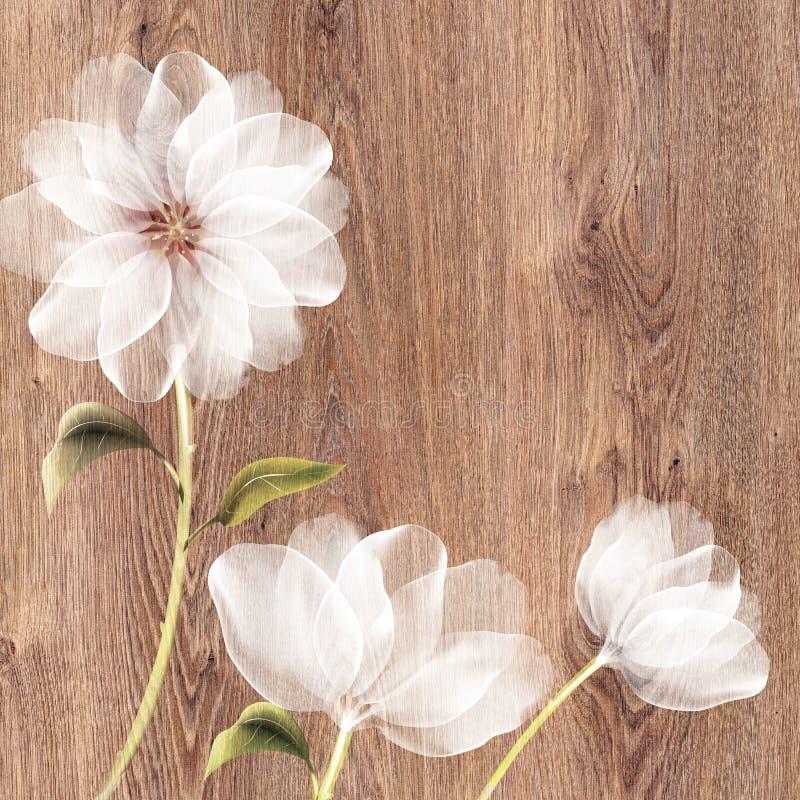 Flor de Tulle en el backround de madera stock de ilustración