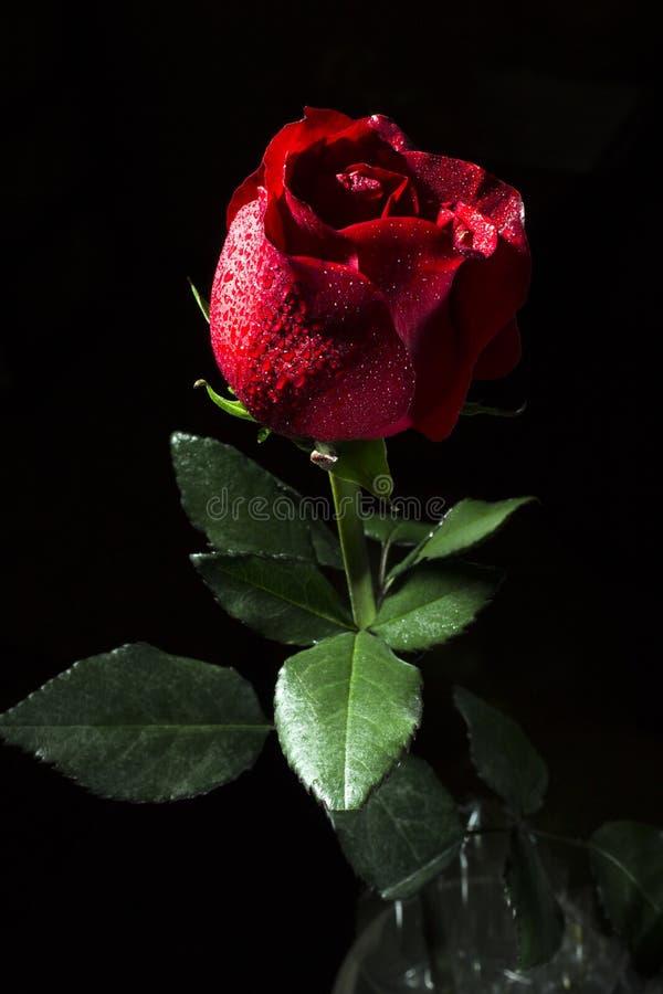 Arranjo de flor rosa vermelha para plano de fundo | Baixar ...  |Rosa Flor Vermelha
