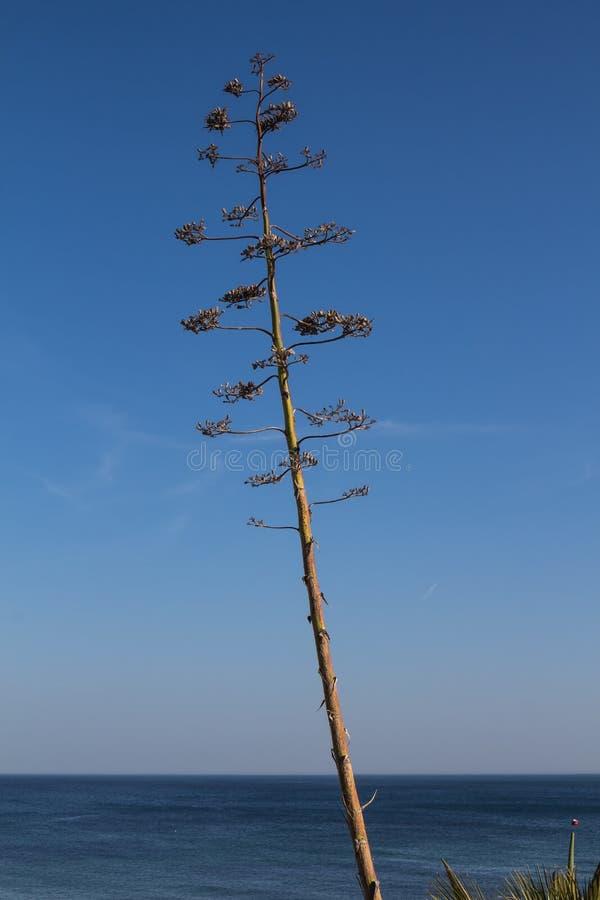 Flor de una planta del agavo foto de archivo