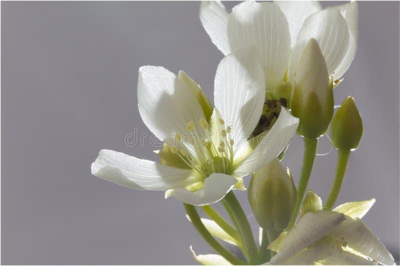 Flor de Venus Flytrap Plant fotografía de archivo libre de regalías