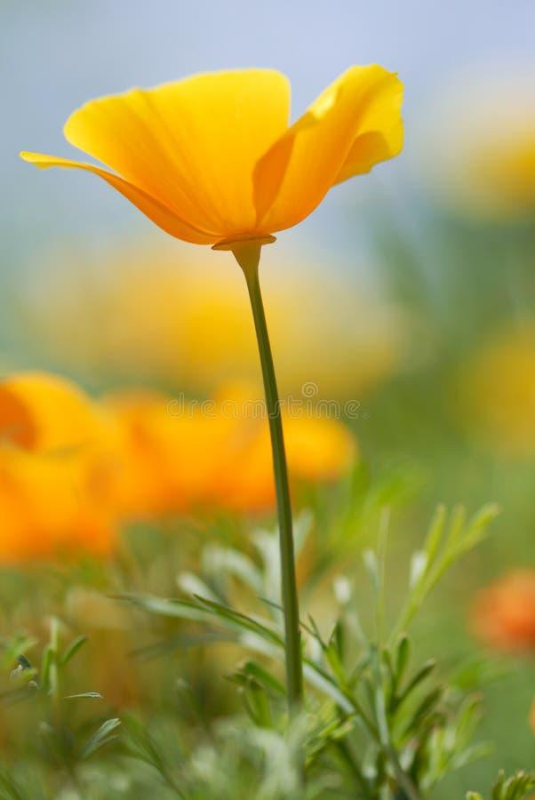 Flor de Yelow imagenes de archivo