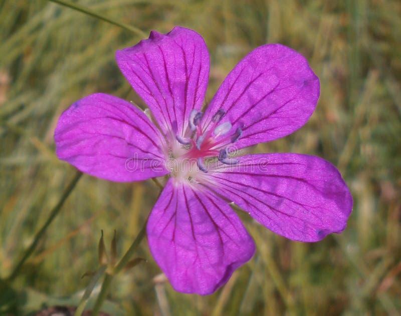 Flor de Yelow foto de stock