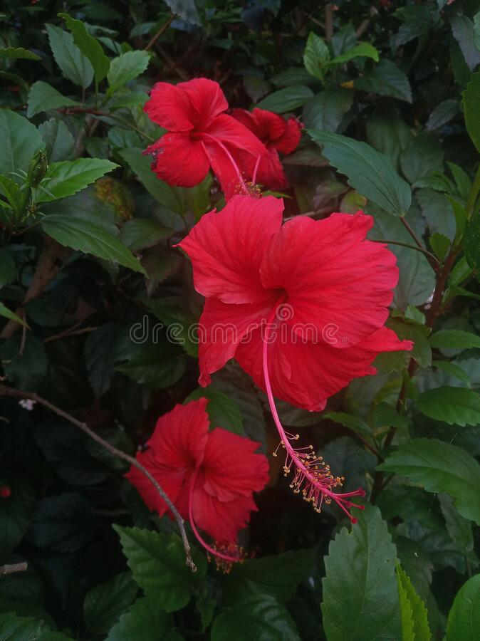 Flor de zapato rojo en el parque fotografía de archivo libre de regalías