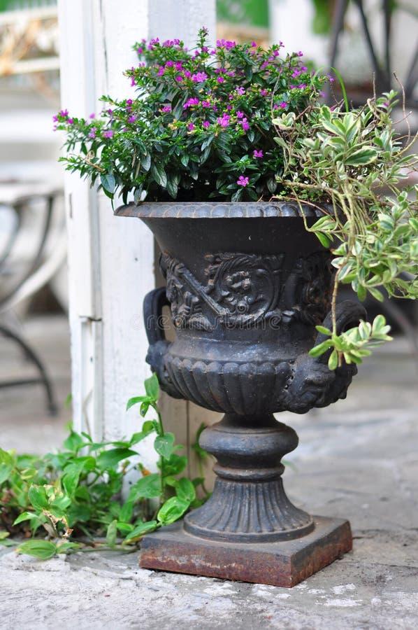 Download Flor Deco foto de archivo. Imagen de barra, florero, planta - 42443046