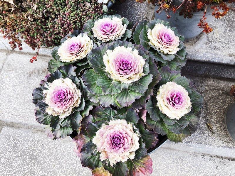 Flor decorativa con un pote de la escalera imágenes de archivo libres de regalías