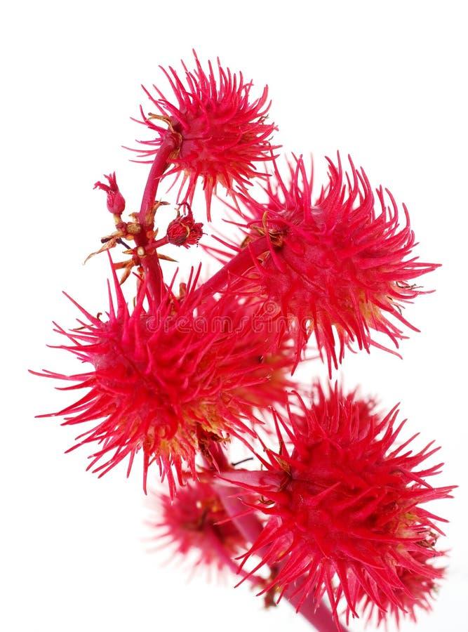 Flor decorativa roja fotos de archivo libres de regalías