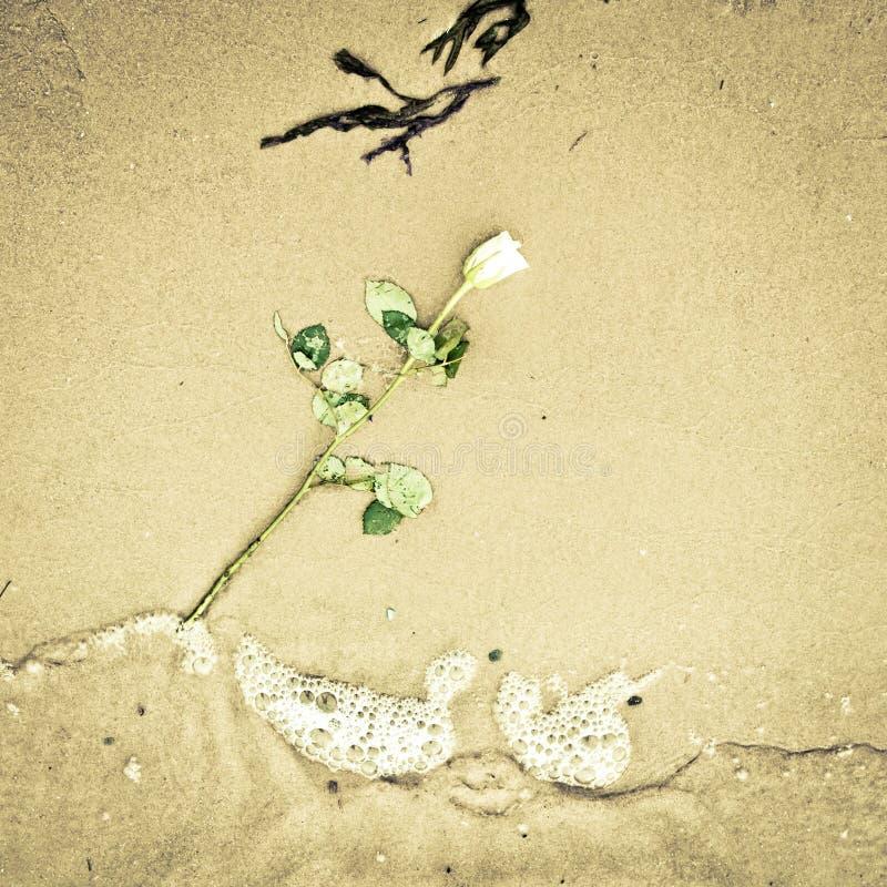 Flor deixada cair fotos de stock