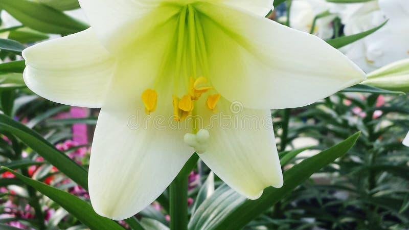 Flor del flor foto de archivo