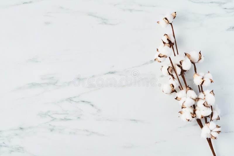 Flor del algodón artificial en el fondo de mármol blanco imagen de archivo