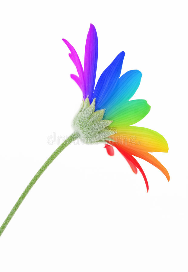 Flor del arco iris imagen de archivo libre de regalías