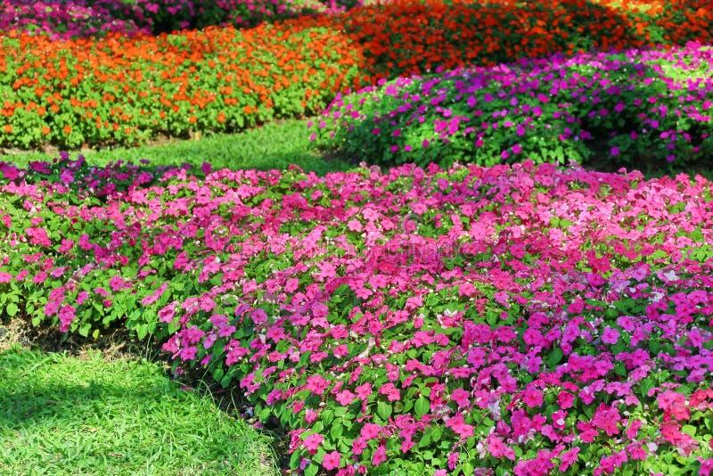 Flor del bígaro imagen de archivo