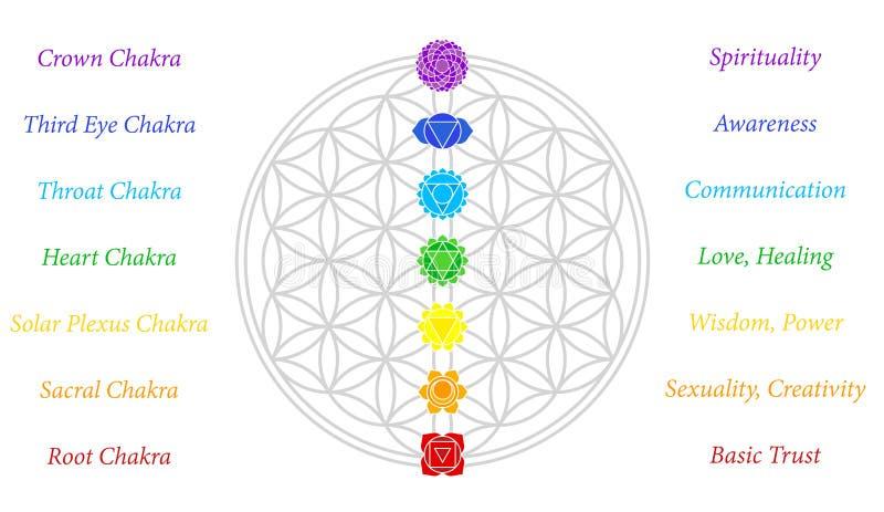Flor del blanco de la descripción de Chakras de la vida ilustración del vector
