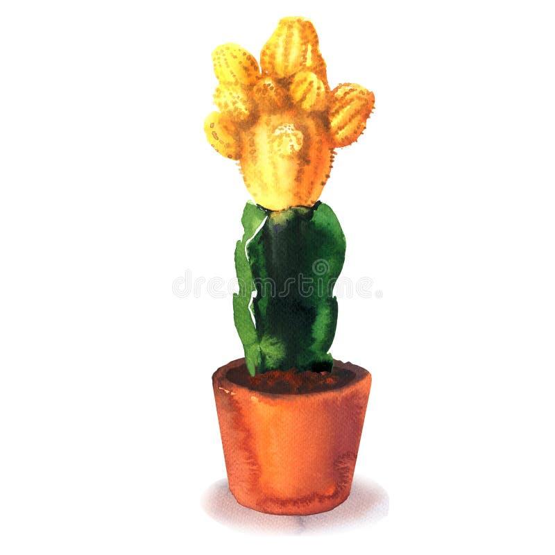 Flor del cactus, flor amarilla, suculenta en la vaina, gymnocalycium variado, especie tropical del cactus del flor, floreciendo ilustración del vector