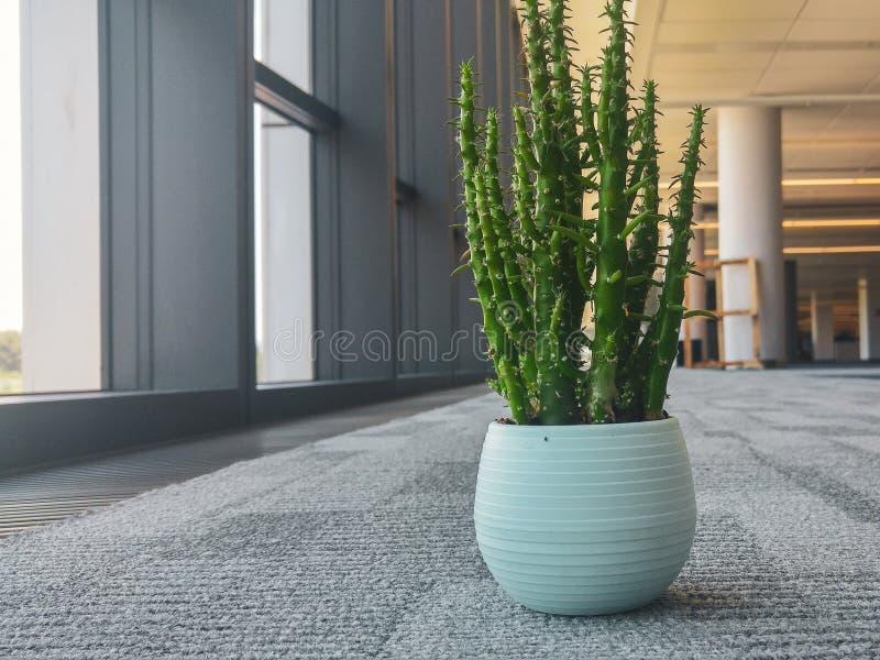 Flor del cactus en la oficina fotos de archivo libres de regalías