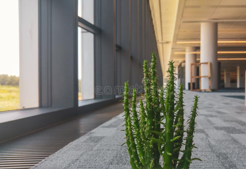 Flor del cactus en la oficina fotografía de archivo libre de regalías