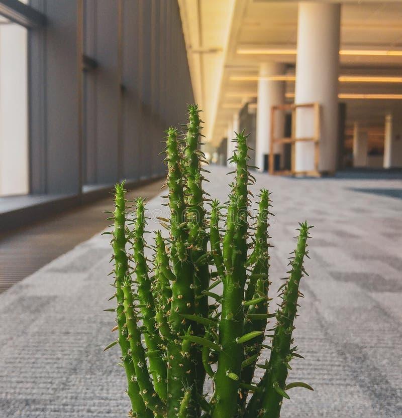 Flor del cactus en la oficina imagen de archivo libre de regalías