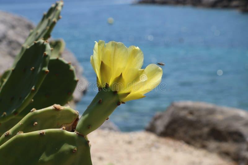 Flor del cactus en la orilla rocosa imagen de archivo libre de regalías