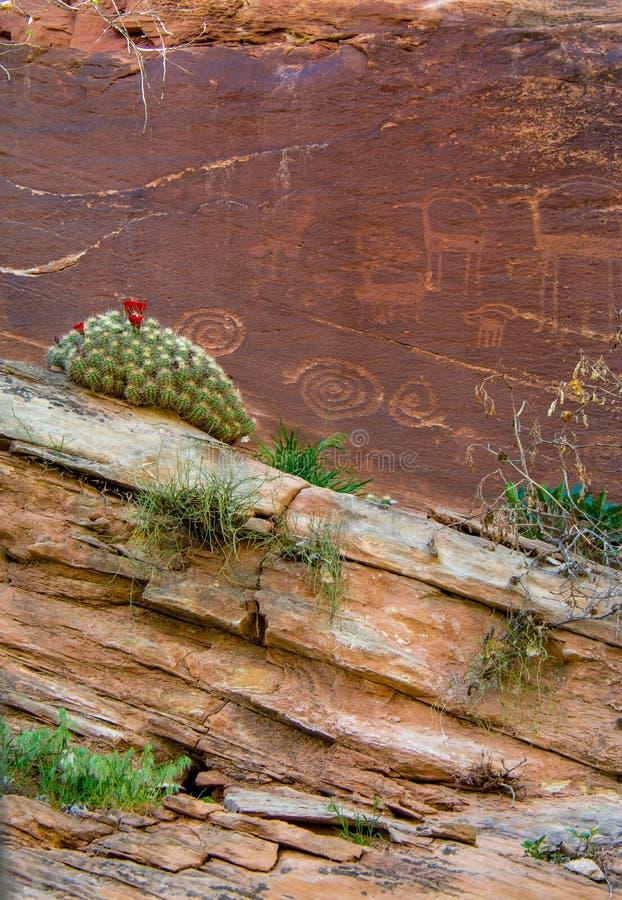 Flor del cactus del petroglifo imagen de archivo libre de regalías