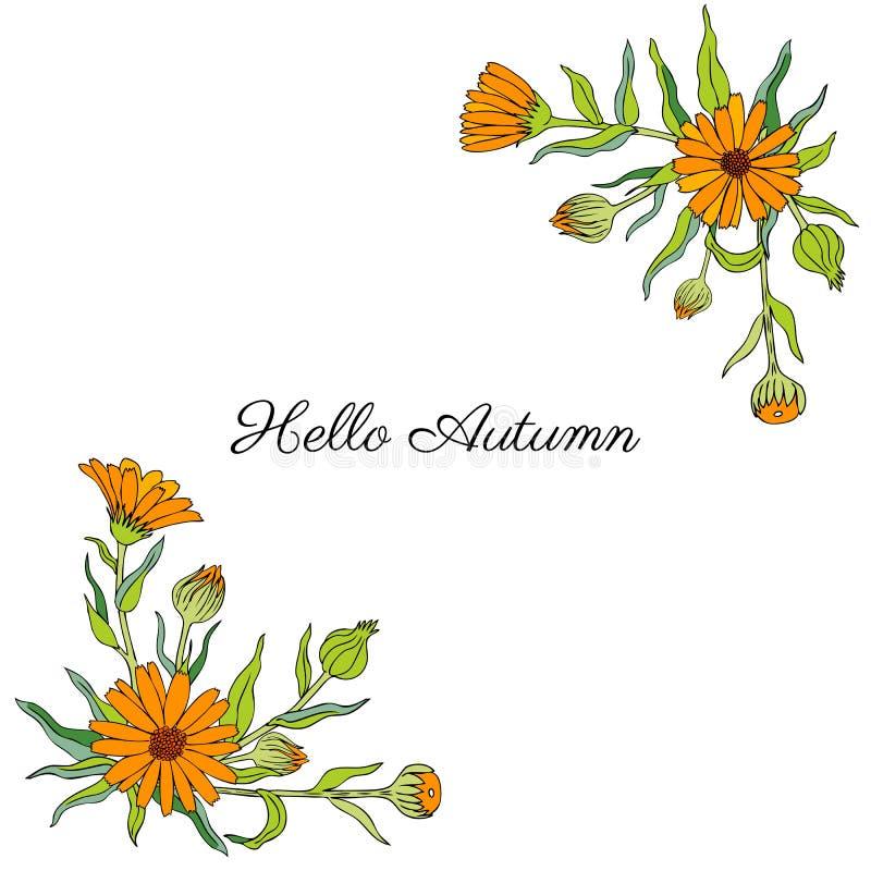 Flor del Calendula aislada en el fondo blanco, maravilla dibujada mano botánica, ejemplo del vector, ramos decorativos libre illustration