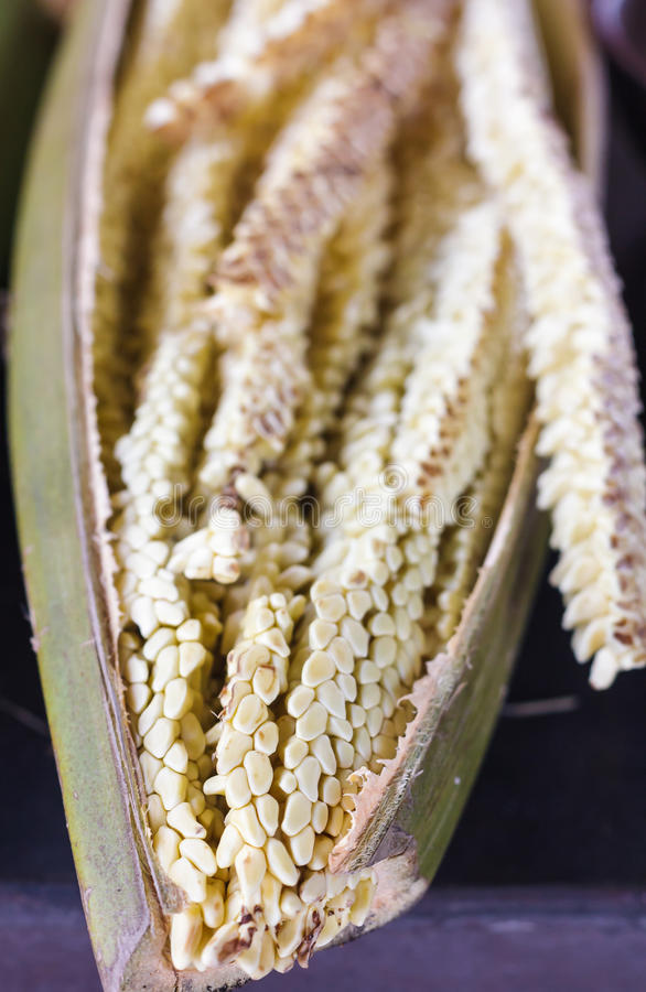 Flor del coco foto de archivo libre de regalías