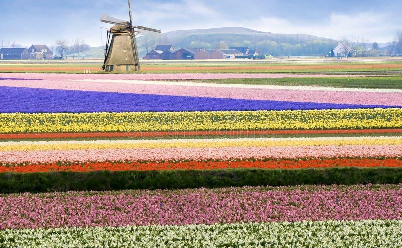 Flor del color del bulbo de flor de Holanda del zapato del estorbo del zueco foto de archivo libre de regalías