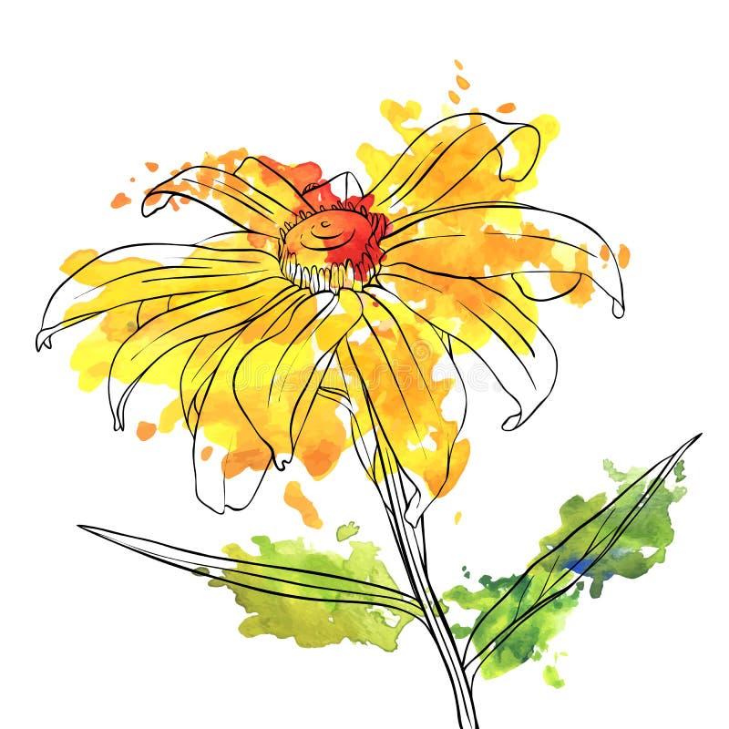 Flor del dibujo del vector de la margarita ilustración del vector
