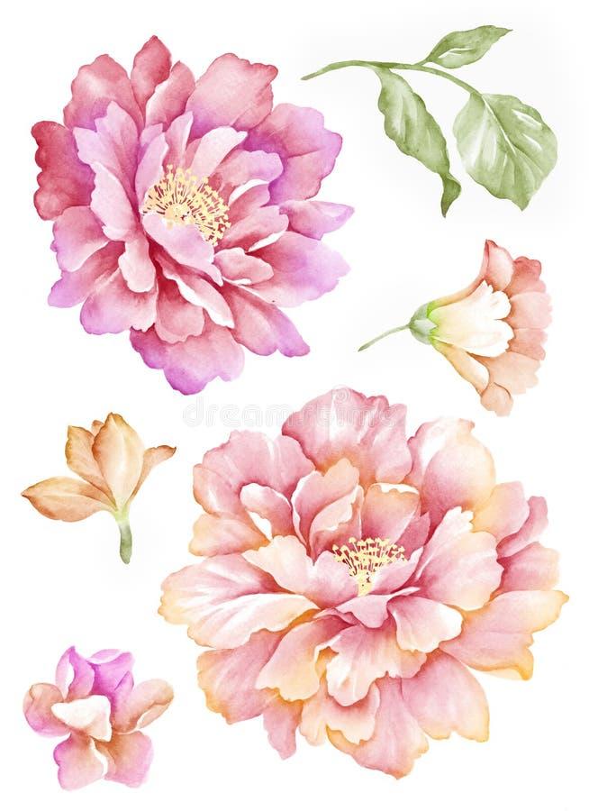 Flor del ejemplo de la acuarela ilustración del vector