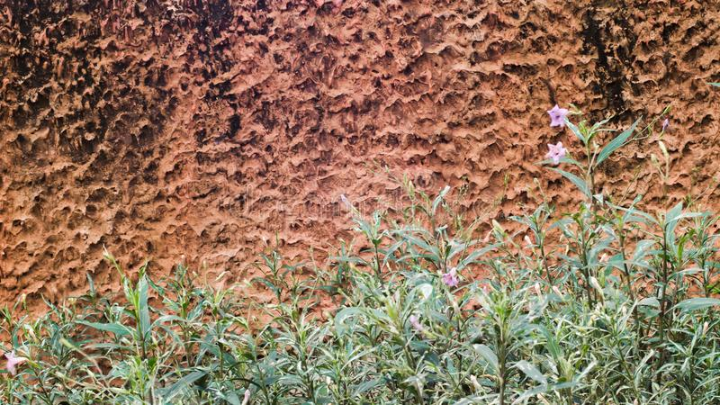 Flor del flor en campo de hierba salvaje con el fondo de la pared del suelo fotos de archivo libres de regalías