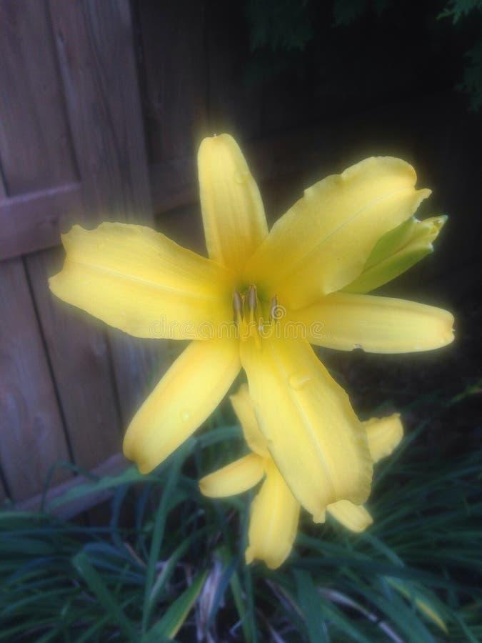 Flor del estiramiento fotos de archivo