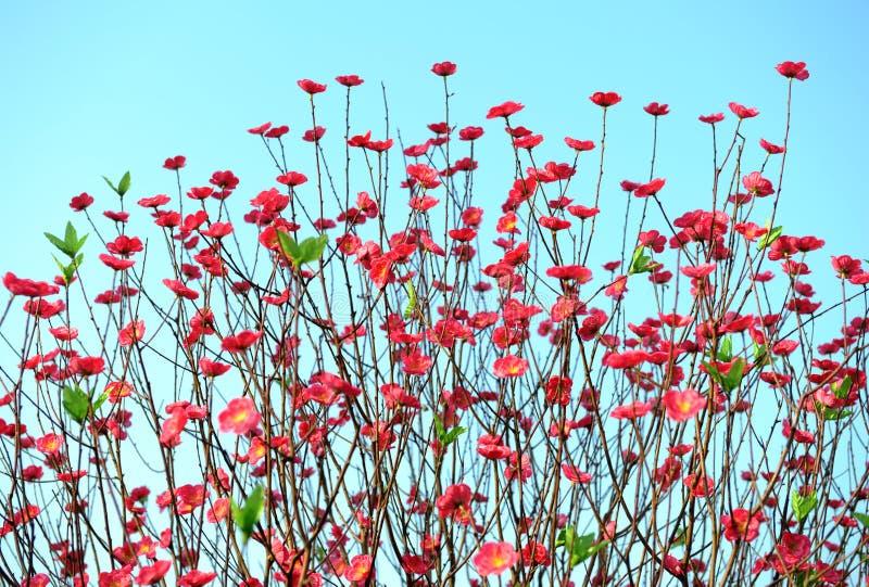 Flor del flor del melocotón imagenes de archivo