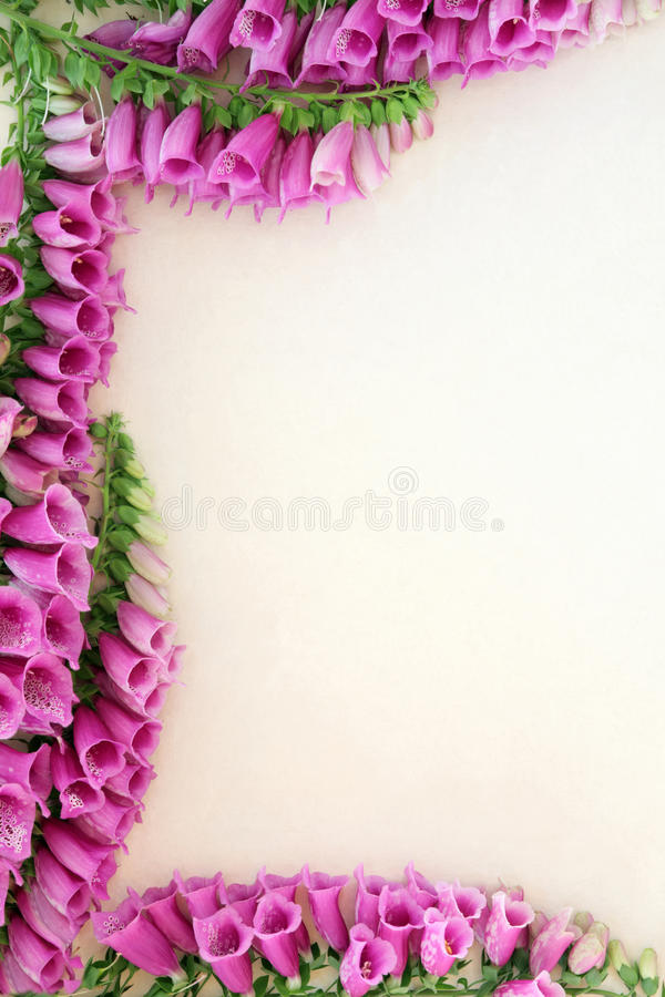 Flor del Foxglove (purpurea de la digital) imagenes de archivo