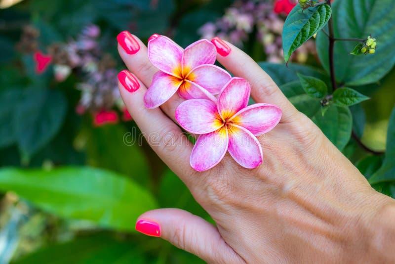 Flor del frangipani del Plumeria en mano de la mujer en un fondo hermoso de la naturaleza imagen de archivo libre de regalías