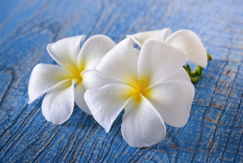 Flor del Frangipani en la tabla azul imágenes de archivo libres de regalías