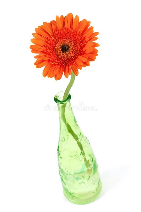 Flor del Gerbera en botella verde foto de archivo libre de regalías