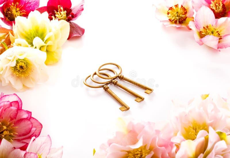 Flor del Hellebore u orientalis del Helleborus y llave antiqued aislados en blanco fotografía de archivo