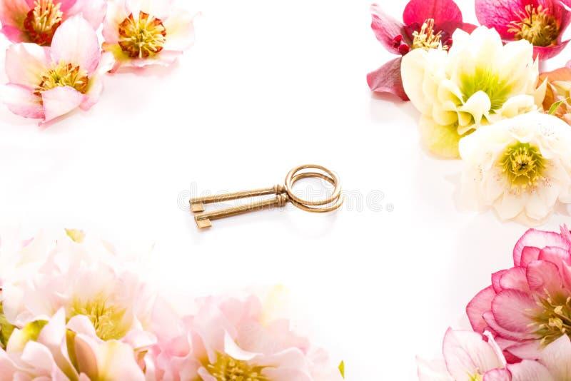 Flor del Hellebore u orientalis del Helleborus y llave antiqued en blanco foto de archivo