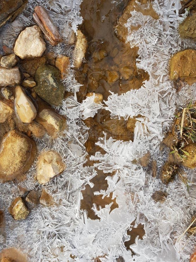 Flor del hielo imagenes de archivo