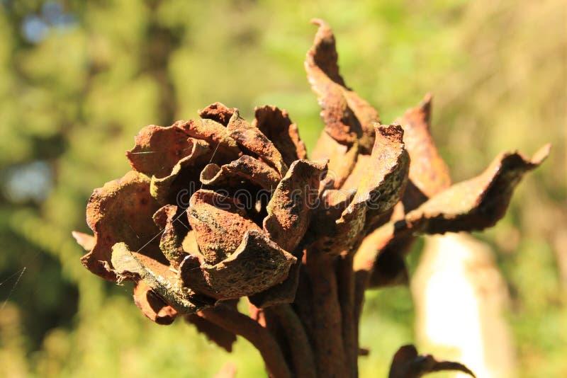 Flor del hierro imagen de archivo