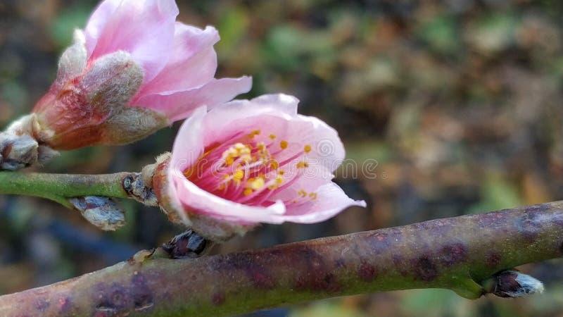 Flor 2 del invierno imagen de archivo