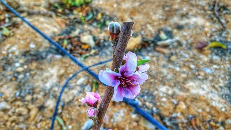 Flor del invierno en mazarron fotografía de archivo