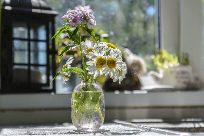 Flor del jardín de la manzanilla en un florero delicado fotos de archivo libres de regalías