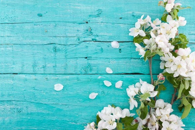 Flor del manzano de la primavera en fondo de madera rústico de la turquesa foto de archivo