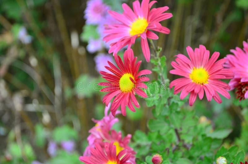 Flor del otoño imagenes de archivo