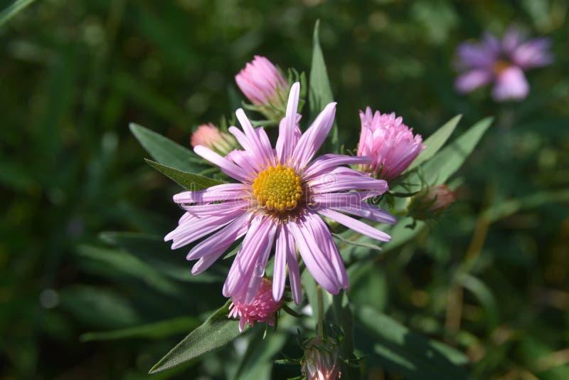 Flor del otoño del campo foto de archivo libre de regalías