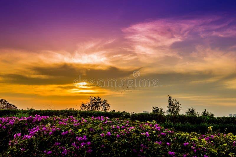 Flor del paisaje en la puesta del sol violeta del sol fotografía de archivo