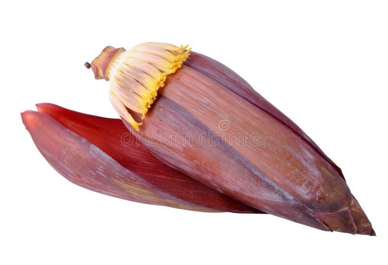 Flor del plátano imagen de archivo libre de regalías